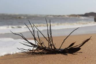 Dreams, washed ashore